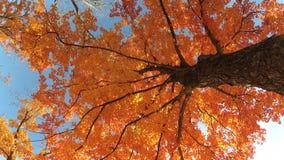 秋天留给自然纹理充满活力 影视素材