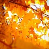 秋天留给自然纹理充满活力 库存图片