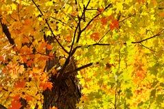 秋天留给晴朗 库存图片