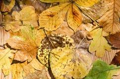 秋天留给湿 库存图片