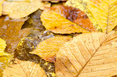 秋天留给湿 库存照片