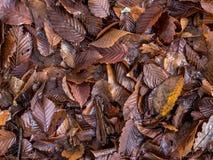 秋天留给自然纹理充满活力 免版税库存图片