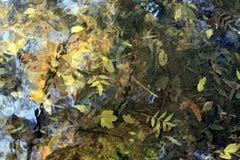 秋天留给自然纹理充满活力 免版税库存照片