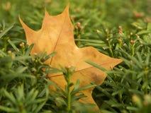 秋天留给自然纹理充满活力 免版税图库摄影