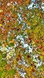 秋天留给自然纹理充满活力 库存照片