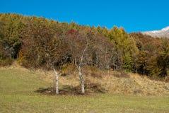 秋天白云岩的颜色 库存图片