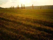 秋天白杨树胡同彩色照相  库存图片