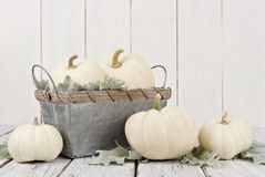 秋天白色南瓜和装饰在白色木头 库存图片