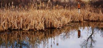 秋天的一个池塘与鸟房子 库存图片
