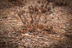 秋天的一棵植物与前片叶子 库存图片