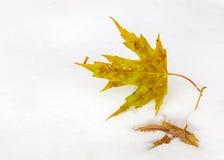 从秋天的两片叶子休息在雪 库存图片