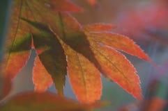秋天的传说 库存照片
