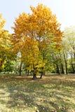 秋天的公园 免版税库存图片
