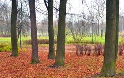 秋天的公园 免版税库存照片