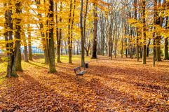 秋天的公园 图库摄影