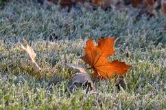 秋天的前个颜色 免版税图库摄影