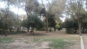 秋天的城市公园 库存图片