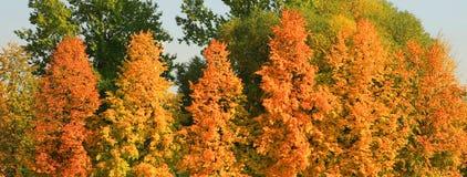 秋天的城市公园 免版税库存图片
