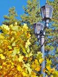 秋天的大熊湖 免版税库存图片