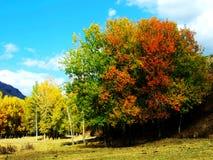 秋天的小大农场 免版税库存图片