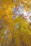 秋天的心脏在森林里 免版税库存图片