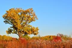 秋天的所有颜色 在一个多彩多姿的领域的明亮的dup 免版税库存图片