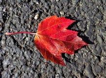秋天的故事从一片叶子开始 库存图片