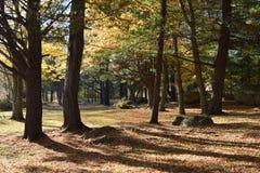 秋天的新英格兰 免版税库存照片