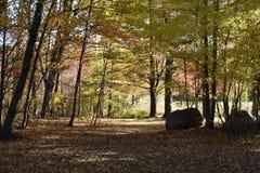 秋天的新英格兰 免版税库存图片