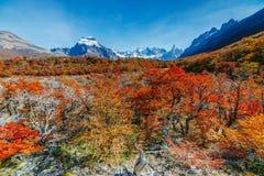 秋天的明亮的公园Los Glaciares的颜色和风景 在巴塔哥尼亚,阿根廷边的秋天 免版税库存照片
