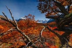 秋天的明亮的公园Los Glaciares的颜色和风景 在巴塔哥尼亚,阿根廷边的秋天 图库摄影