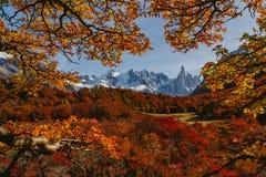 秋天的明亮的公园Los Glaciares的颜色和风景 在巴塔哥尼亚,阿根廷边的秋天 免版税库存图片