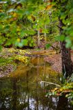 秋天的明亮的森林河 库存照片