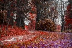 秋天的明亮的颜色 有许多的森林道路下落的叶子,猩红色秋天风景在老公园 走,心情 库存照片