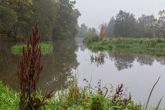 秋天的有雾的河 库存照片