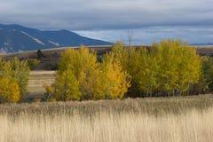 秋天的标志在贝尔格莱德,蒙大拿 库存照片
