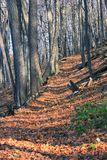秋天的树木繁茂的步行 免版税图库摄影