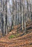 秋天的树木繁茂的足迹 免版税库存图片