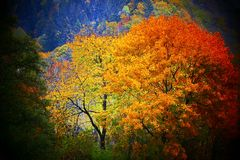 秋天的树 免版税图库摄影