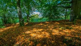 秋天的森林与在起斑纹的光的金黄叶子 库存图片