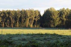 秋天的森林与雾 免版税库存图片