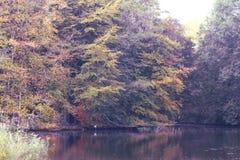 秋天的森林在湖附近 库存图片