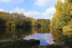 秋天的森林在湖附近 库存照片