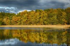 秋天的森林 库存照片