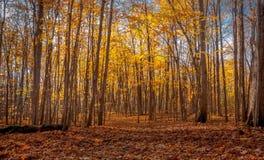 秋天的森林 库存图片