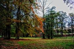秋天的森林 免版税图库摄影