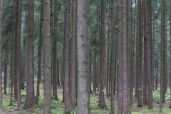 秋天的森林 免版税库存图片