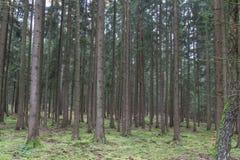 秋天的森林 图库摄影