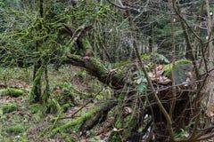 秋天的森林 免版税库存照片