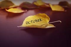 秋天的概念 图库摄影